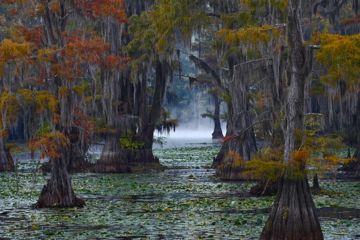 Caddo Lake, Texas And Louisiana, USA