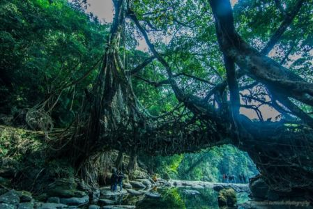 Living Bridges In Cherrapunji, India