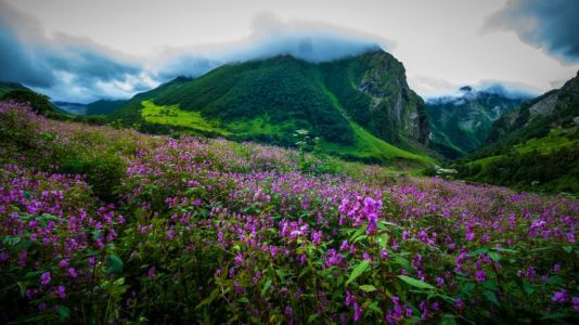 Valley Of Flowers, Uttarakhand, India