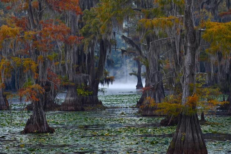Caddo Lake, Texas And Louisiana, USA